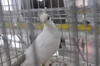 Hünkari Güvercinleri Güzellik Yarışmasında Görücüye Çıktı