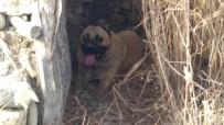 KÖPEK DÖVÜŞÜ - Burdur'da Köpek Dövüşü İddiası