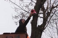 BAYRAMPAŞA BELEDİYESİ - Minik Dostlarımız Açıkta Kalmasın Dediler, Ağaçlara Kuş Evleri Astılar