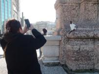 (Özel) Taksim Cumhuriyet Anıtı'na Çıkan Kedi Turistlerin İlgi Odağı Oldu