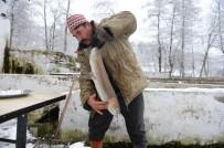 (Özel) Uludağ'ın Eteklerindeki Alabalıklar İşte Böyle Üretiliyor