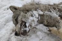 SOĞUK HAVA DALGASI - Sivas'ın ayazı koca kurdu dondurdu