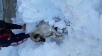 KÖPEK - Üzerine Kar Yığını Düşen Köpek Kurtarıldı
