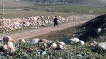 91 Yaşındaki Iraklı Azizi Her Gün 2 Saat Yürüyüş Yapıyor