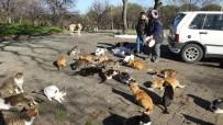 Emekli Hemşire 14 Yıldır Sokak Kedilerini Besliyor
