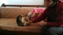 Felçli Kuzunun Süt Annesi Bir Köpek