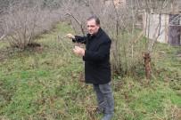 Fındıkta Büyük Tehlike Açıklaması 'Kahverengi Kokarca'