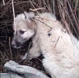 Silahla İğnelenen Köpeklerin Katledildiği İddiası