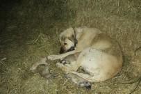 KÖPEK - Yavru Kangallar Dondurucu Soğuğa Dayanamadı