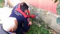 Adana'da Hayvan Kurtarma Operasyonları