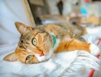 MELİH CEVDET ANDAY - Edebiyatçıların ilhamı ve yoldaşı kediler