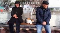 TAKSİ DURAĞI - Otobüs Durağı, Kedilere Yuva Oldu