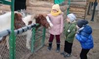 ÇUKURAMBAR - Tatil Çocuklarının Pony Sevinci