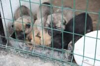 YAVRU KÖPEK - Aç Ve Donmak Üzere Olan Yavru Köpekler Hayvan Barınağına Yerleştirildi