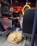SOKAK KÖPEĞİ - Aracına Sığınan Köpeği Taşıyan Dolmuş Şoförü Alkış Aldı
