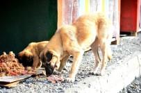 BEYLIKDÜZÜ BELEDIYESI - Beylikdüzü'nde Sokak Hayvanlarına Her Gün 4 Buçuk Ton Yemek