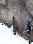 Bingöl'de Yaban Hayvanlar İçin Doğaya Yem Bırakıldı