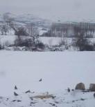 Kaman AK Parti İlçe Başkanlığı Yaban Hayvanları İçin Doğaya Yem Bıraktı