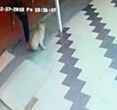 DAYAK - Önce Köpeğe Tekme Attı Sonra Sopa İle Saldırdı