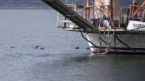 GÖLLER - Burdur Gölü 'Özel' Misafirlerini Ağırlıyor