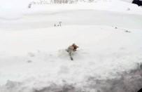 ÖZALP BELEDİYESİ - Soğuktan Tilki Dondu