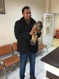 Bulduğu Yaralı Şahini Hayvan Hastanesi'ne Götürdü