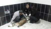 Kayalıktan Düşen Yavru Yaban Keçisi Ve Dereye Düşen Köpek, Tedavi Altına Alındı
