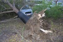 HÜKÜMET KONAĞI - Kemer'de Fırtına Ağaçları Kökünden Söktü