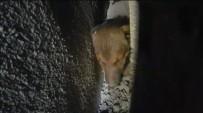 Köpeği Kurtarmak İçin Duvarı Yıktılar