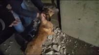 Duvarı Yıkıp Köpeği Kurtardılar