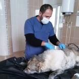 Fosseptik Çukuruna Düşen Köpek Kurtarıldı