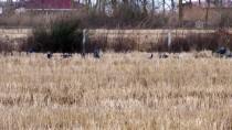 19 MAYıS - Göçmen Kuşların Kış Durağı Kızılırmak Deltası