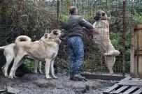 YAVRU KÖPEK - (Özel) Bu Köpeklerin Değeri Dudak Uçuklatıyor