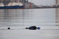 CENAZE ARACI - Samsun'da Denizde Ceset Bulundu