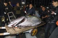 ORKİNOS - Tokyo'da Balık Mezatında Rekor Fiyat, 16 Milyon Liraya Satıldı