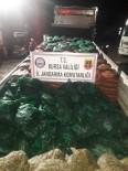 Bursa'da 19 Ton Kaçak Midye Ele Geçirildi