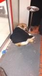 Montunu Çıkarıp Üşüyen Köpeğin Üzerine Örttü