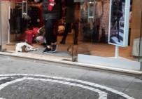 Üşüyen Hayvanlar Mağazada Isındı