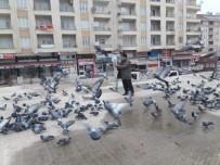 Güvercinler Renkli Görüntüler Oluşturuyor