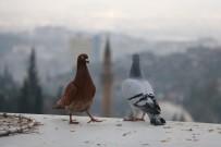 Çocuk Yaşta Beslemeye Başladığı Güvercinlerine Gözü Gibi Bakıyor
