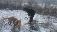 Ereğli Belediyesi Sokak Hayvanlarını Unutmadı