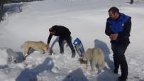 Karda Aç Kalan Hayvanlara Yem Bıraktılar