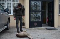 ÜSKÜP - Kırklareli'nde Vurulmuş Karaca Bulundu