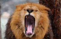 HAYVANAT BAHÇESİ - (Özel) Kar Altında Hayvanların Muhteşem Görüntüleri