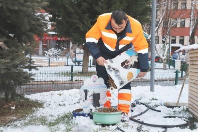 Çankırı Belediyesi Soğuk Havada Sokak Hayvanlarını Unutmadı
