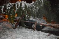 ÇAM AĞACI - Kara Dayanamayan Ağaç Otomobilin Üzerine Devrildi
