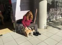 Kedi İle Köpeğin Soğuk Hava Dostluğu Yürekleri Isıttı