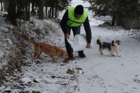 (Özel) Karda Sokak Hayvanlarını Elleriyle Beslediler
