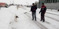 Sokak Hayvanları Tedavi İçin Toplanıyor