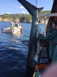 Köpek Balığına Tekmeye Ceza Geldi